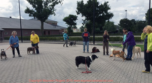 Canine Workshops with dogs